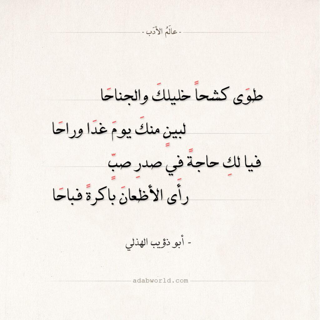شعر أبو ذؤيب الهذلي - طوى كشحا خليلك والجناحا
